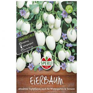 Eggplant Eierbaum - My Organic World