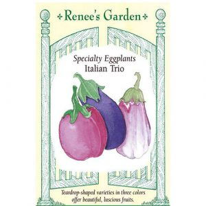 Italian Trio - My Organic World