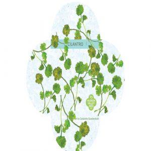 Organic Cilantro - My Organic World