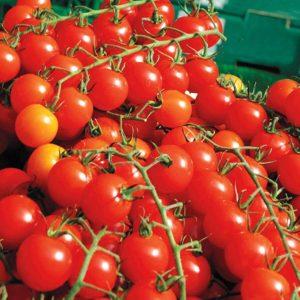 Tomatoes Sweet Million F1