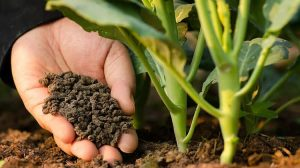 الأسمدة ورعاية النباتات