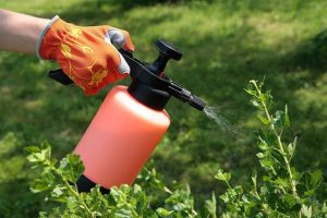 المبيدات الحشرية وحماية النبات